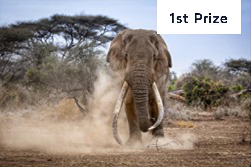1st-prize_elephant-2016