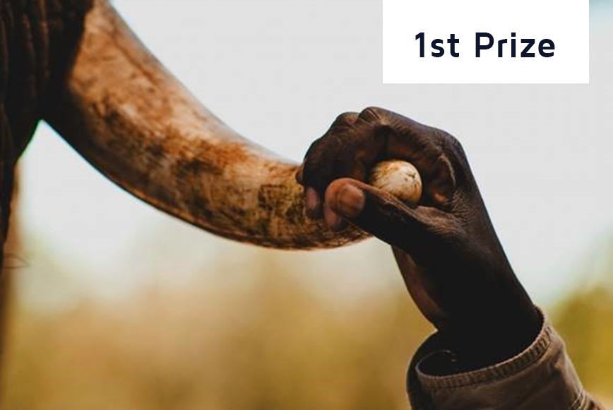 1st-prize_2018